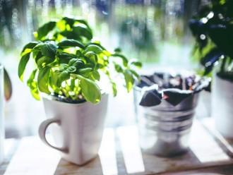 Zelený a jedlý balkon: Jak pěstovat bylinky a zeleninu ve městě?
