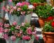 Zkrášlete letní zahrádku nebo terasu. Jaké květiny sázet a jak o ně pečovat?